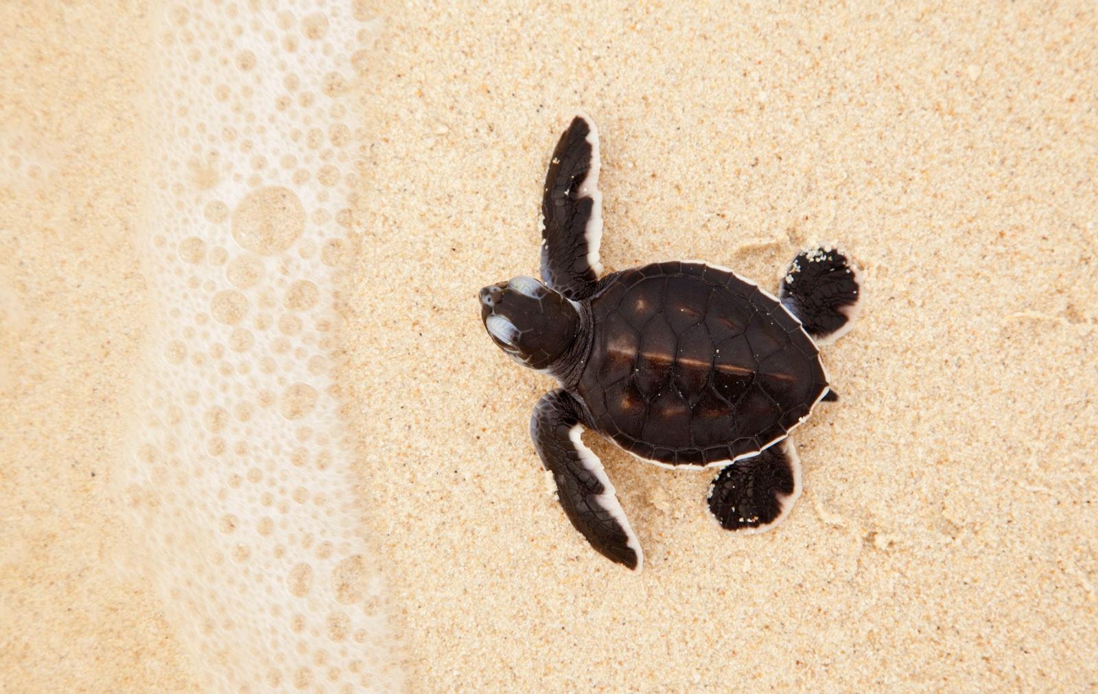 Черепаховые острова Борнео