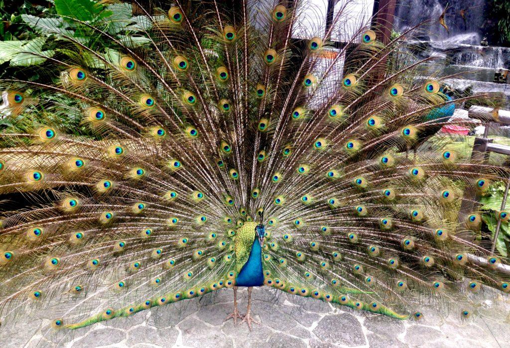 Парк птиц Куала Лумпур Малайзия