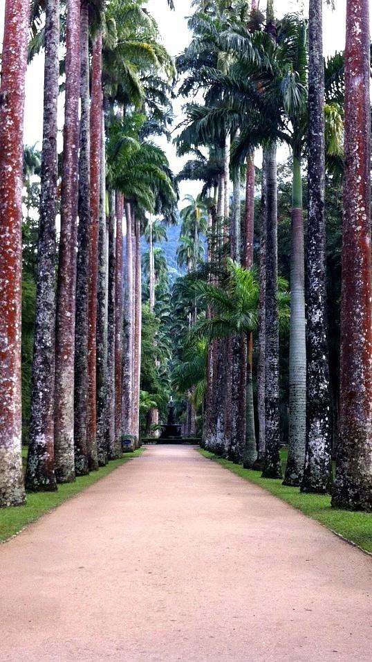 Рио де Жанейро, Растения, Бразилия