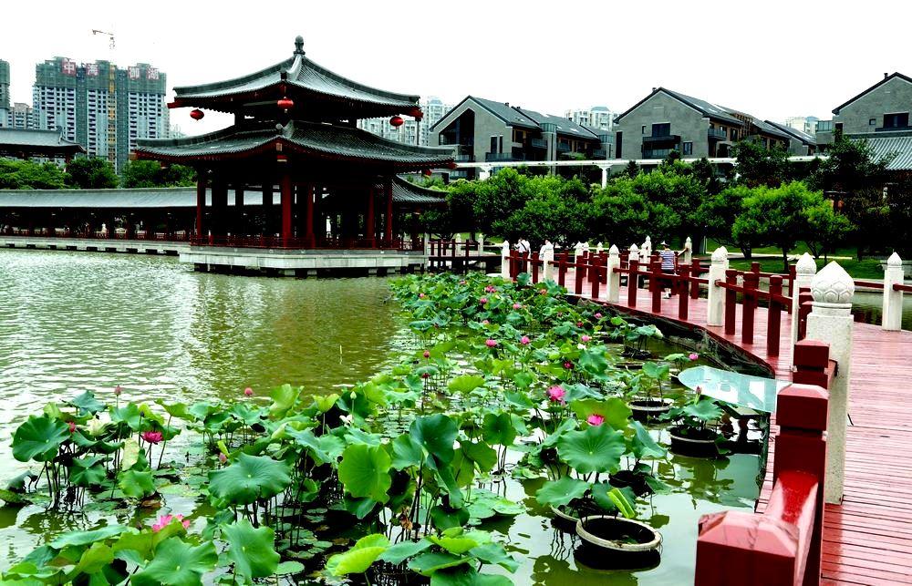 Сад лотосов династии Тан, Сиань, Китай