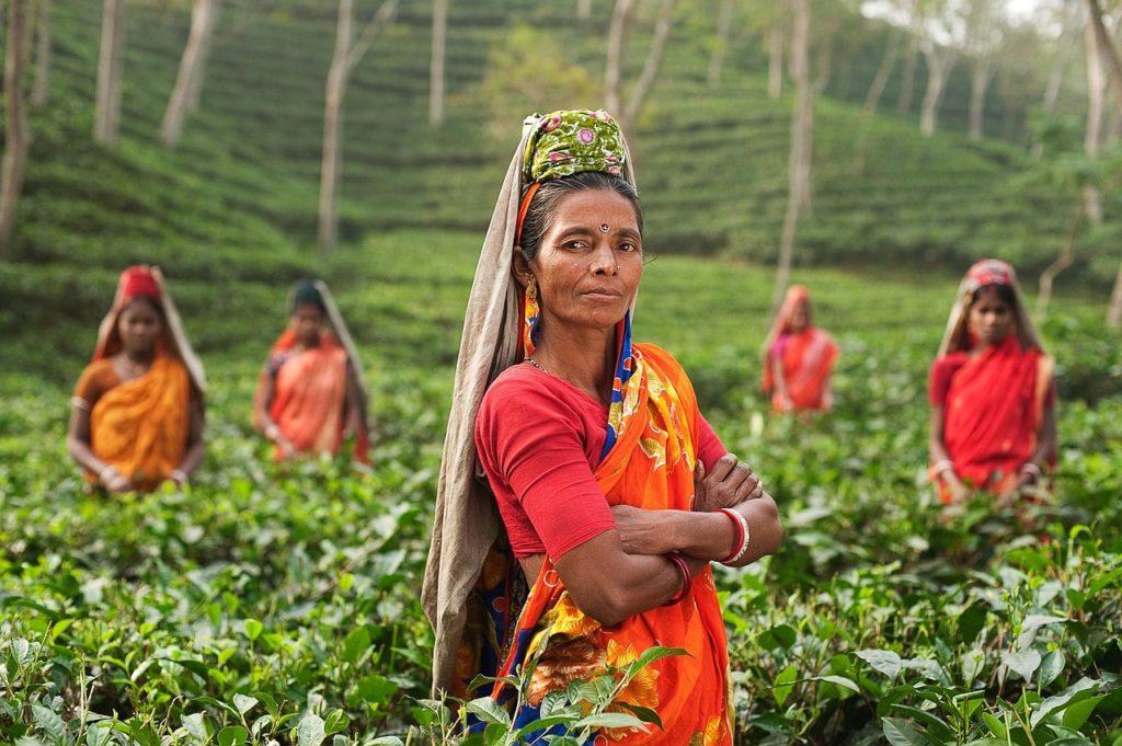 чайные поля в Индии