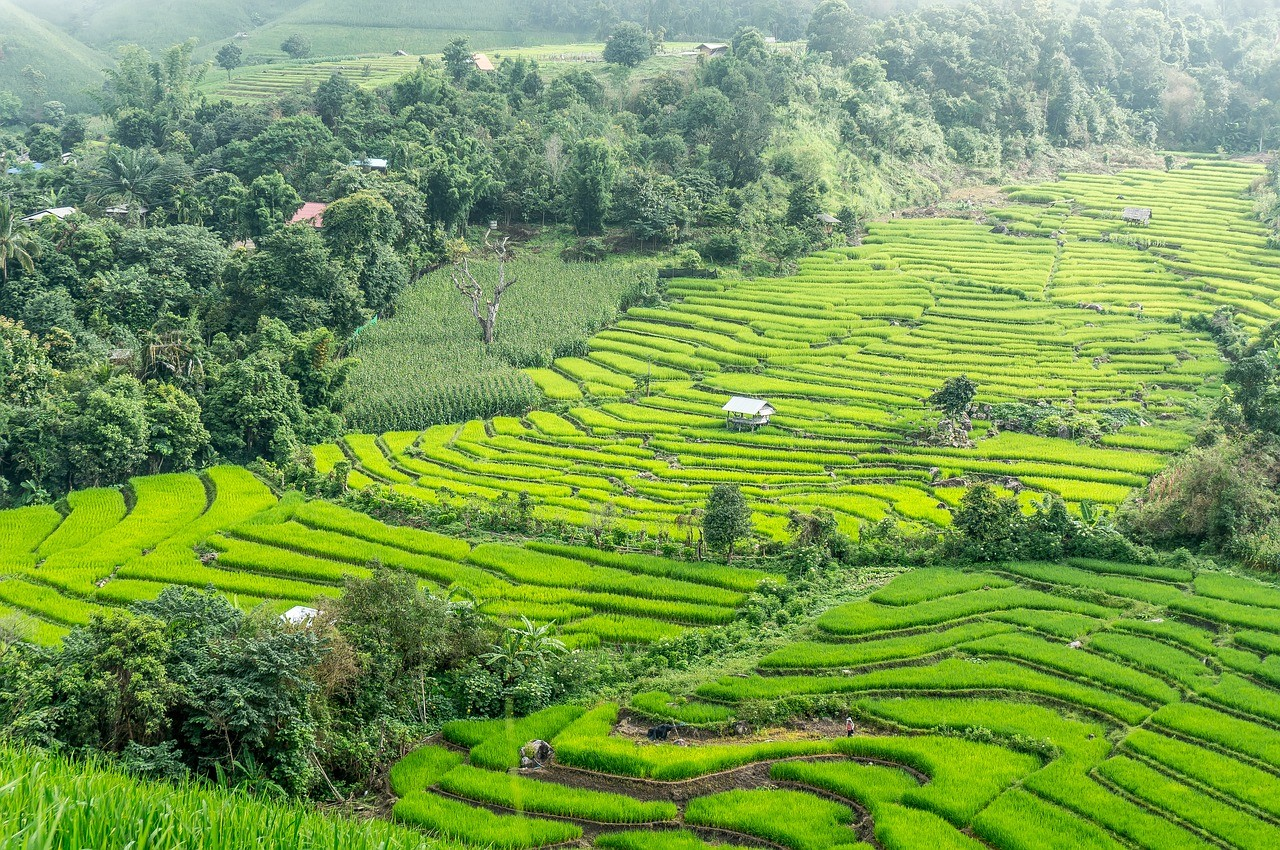 рисовые террасы, Таиланд