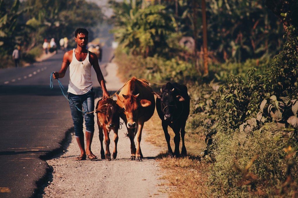 сельская жизнь в Индии