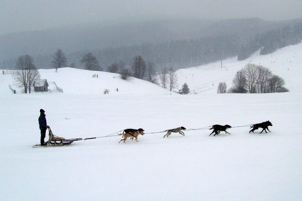 Собачьи Упряжки, Доновалы, Словакия