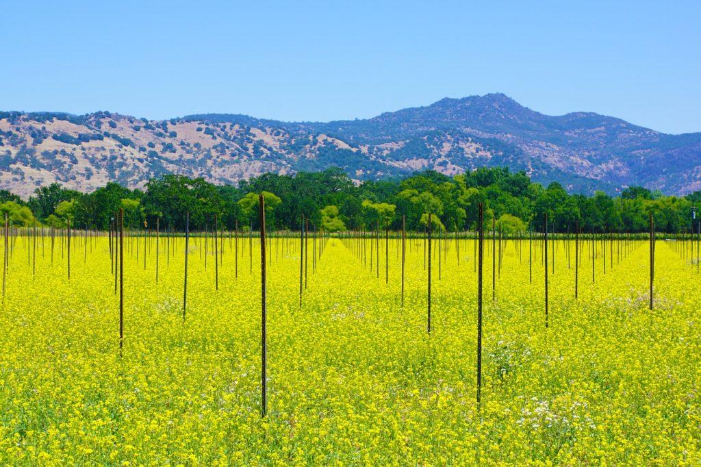 Долина Напа, Калифорния, США
