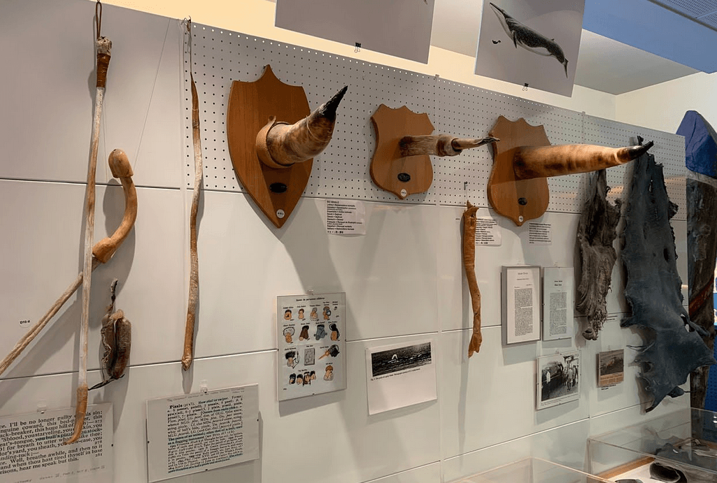 Исландский Фаллологический Музей, исландия
