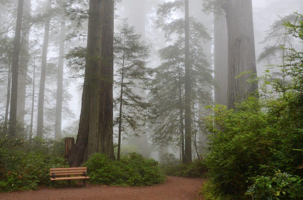 Национальный лес Секвойя, Калифорния, США