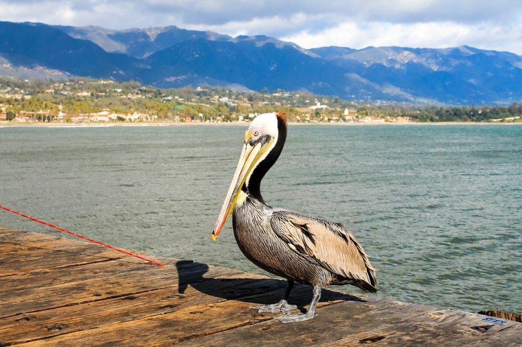 Санта Барбара, Калифорния, США