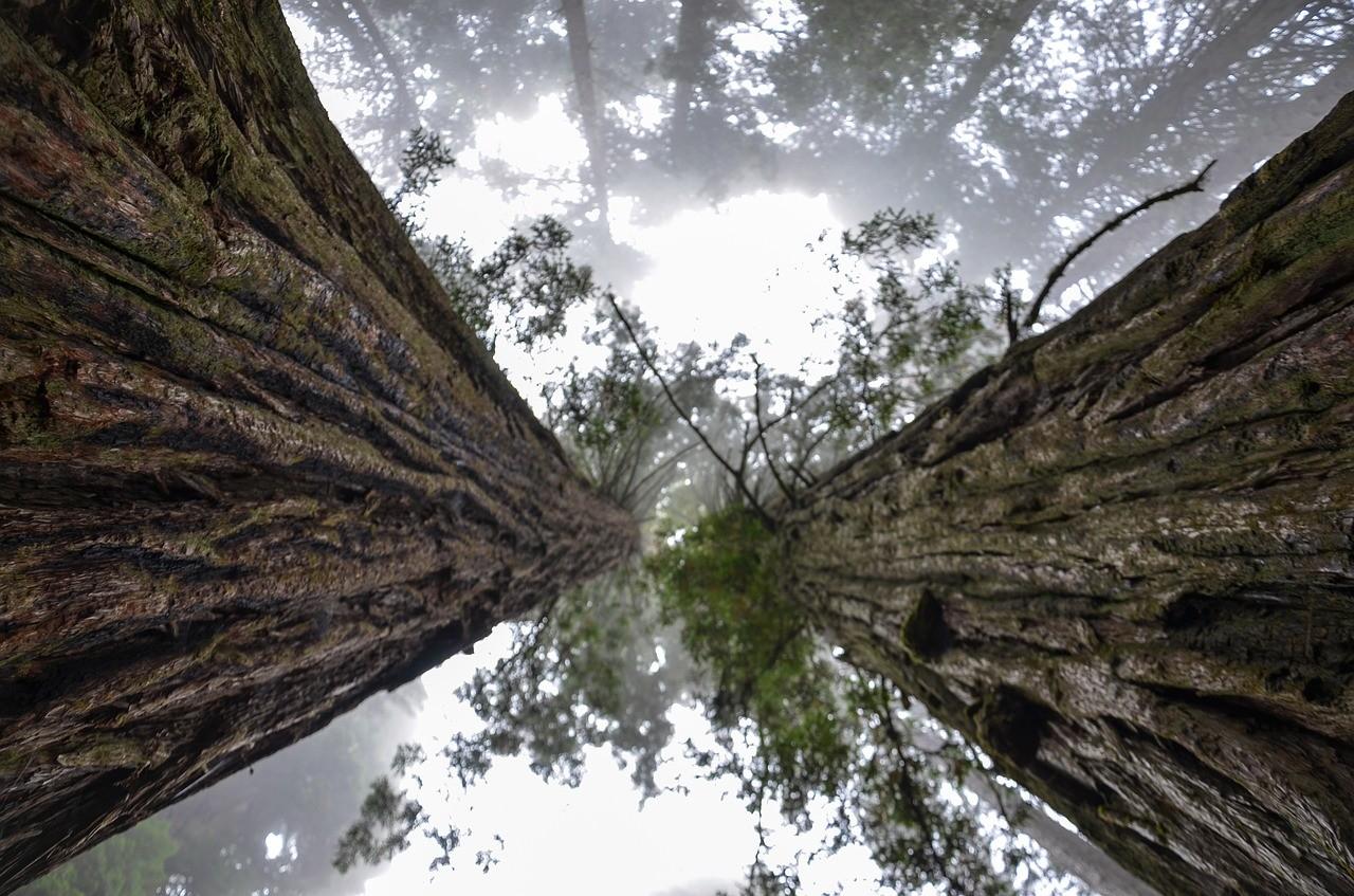 Национальный и государственный парк Редвуд, Сан-Франциско, США