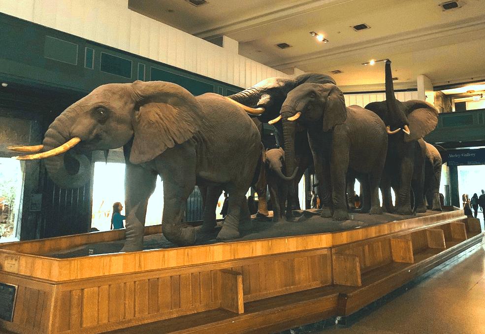 Американский музей естественной истории, Нью-Йорк, США