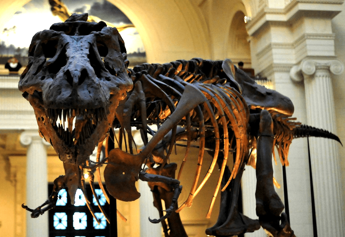 Филдовский музей естественной истории, Чикаго, США