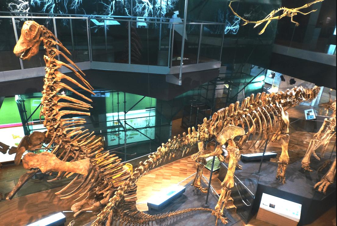 Мельбурнский музей, Мельбурн, Австралия