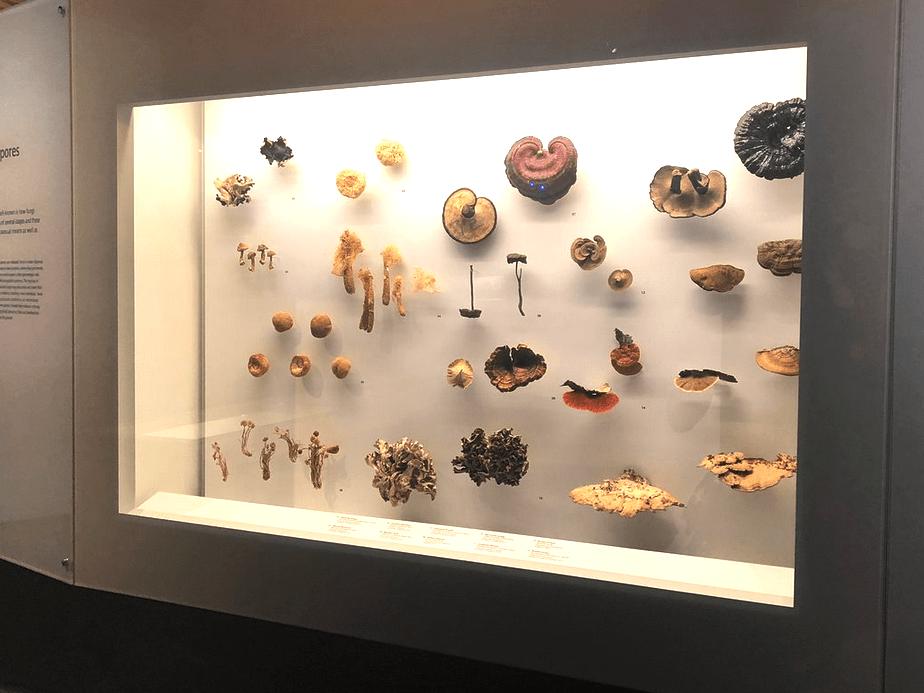 Музей естественной истории Lee Kong Chian, Сингапур
