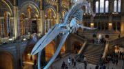 Музей естествознания, Лондон, Великобритания