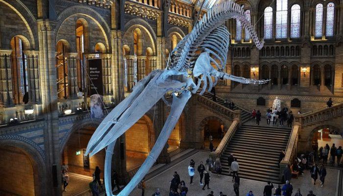 Топ-10 лучших музеев естествознания мира