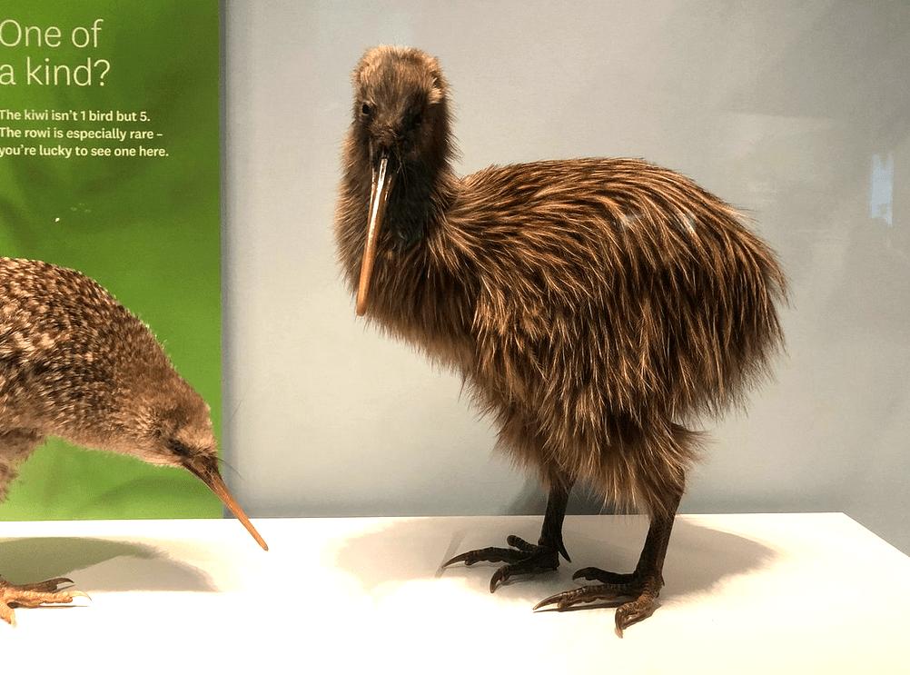 Музей Новой Зеландии или Те Папа Тонгарева, Веллингтон, Новая Зеландия