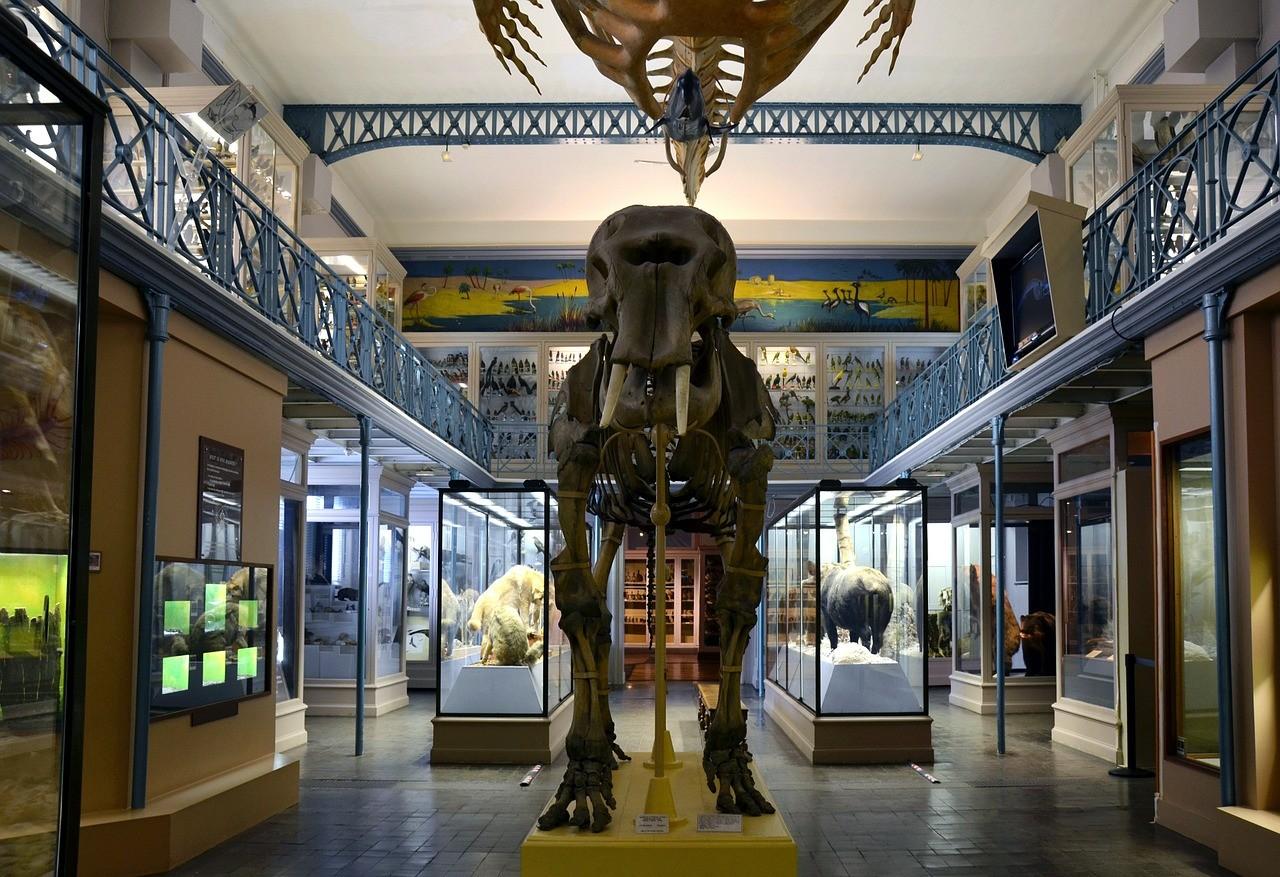 Национальный музей естествознания, Париж, Франция