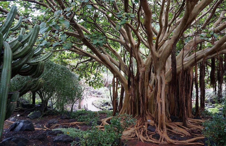 канарские острова лес
