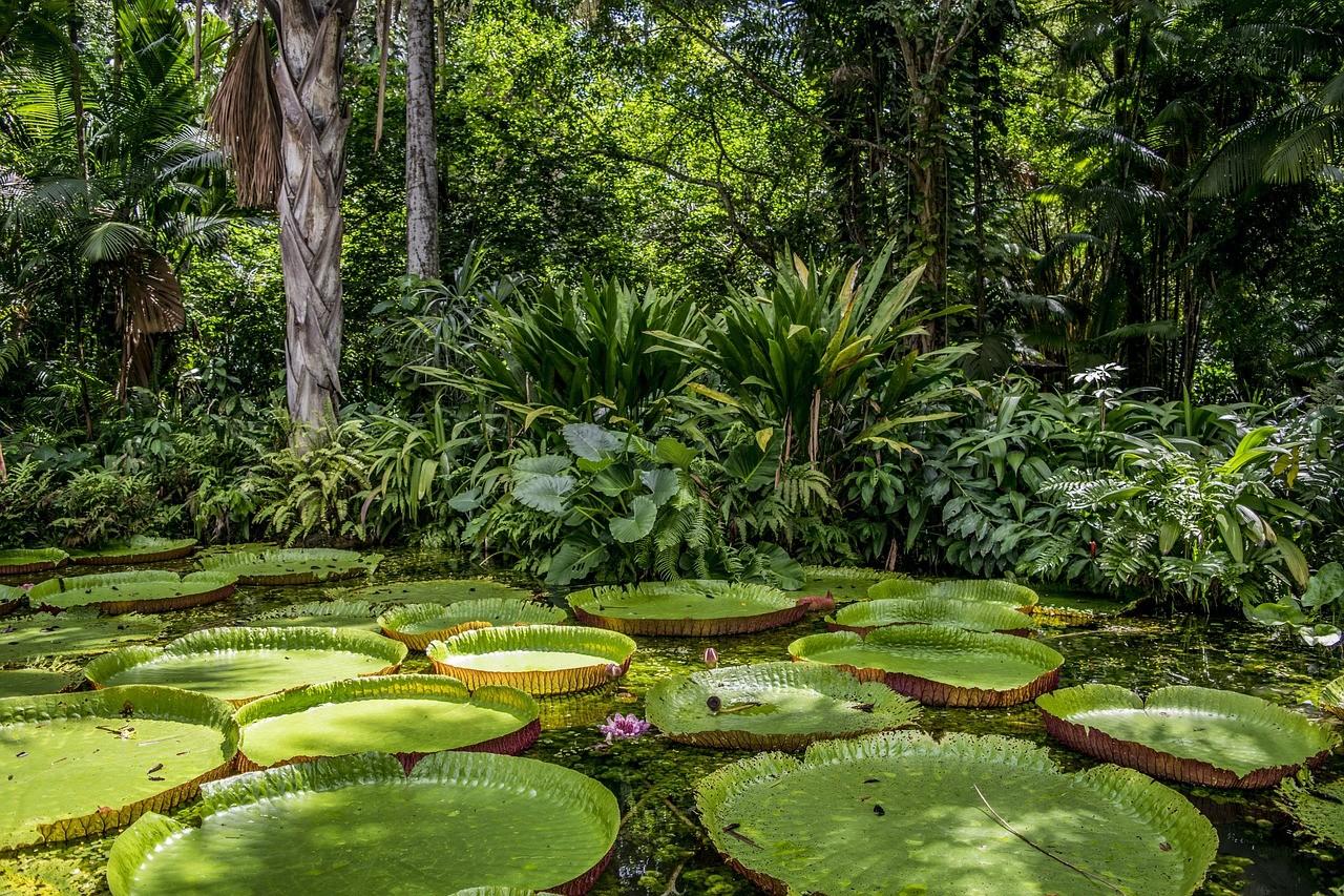 Бразильский Атлантический лес в штатах Баия и Эспириту-Санту, Бразилия