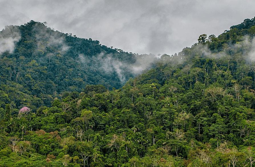 Национальный парк Ману в Амазонке, Перу