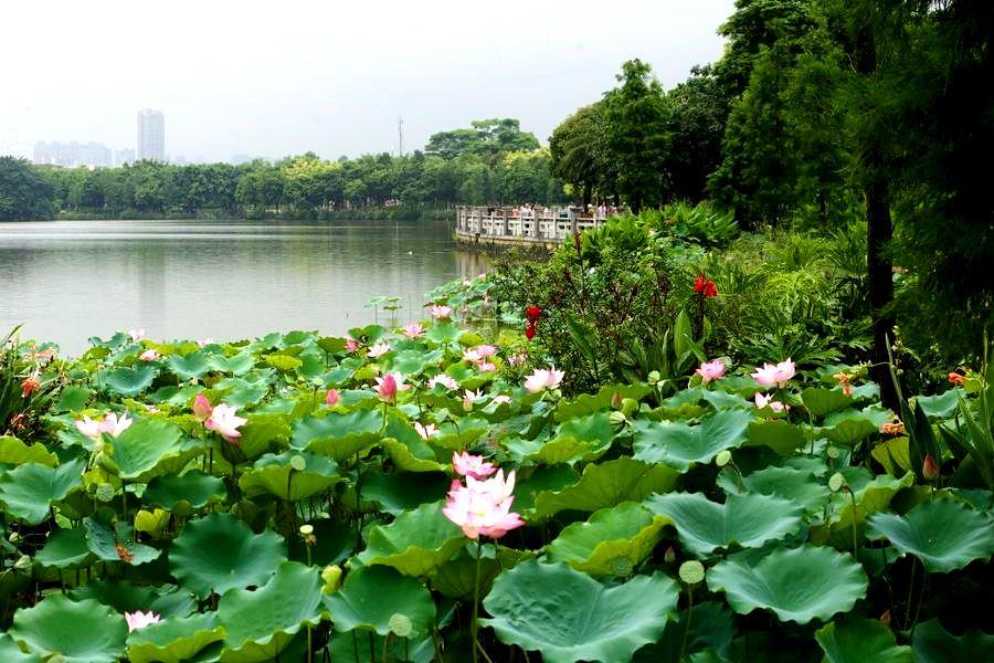парк Хайчжуху, Гуанчжоу, Китай