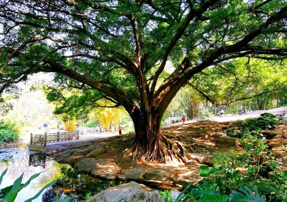 Парк Сяоган, Гуанчжоу, Китай